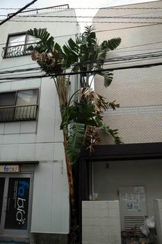 edogawabashi151小小.jpg