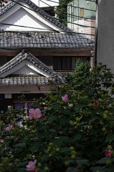 kagurazaka-59小小.jpg